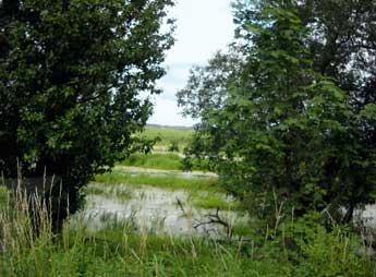Everglades - an der Küstriner Chaussee