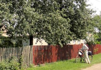 Knödelbäume in Beaulieu