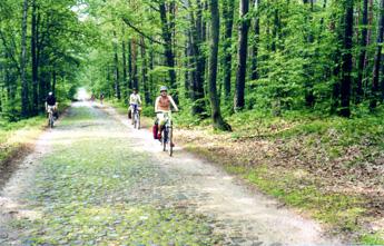 Radtour im Blaubeerwald